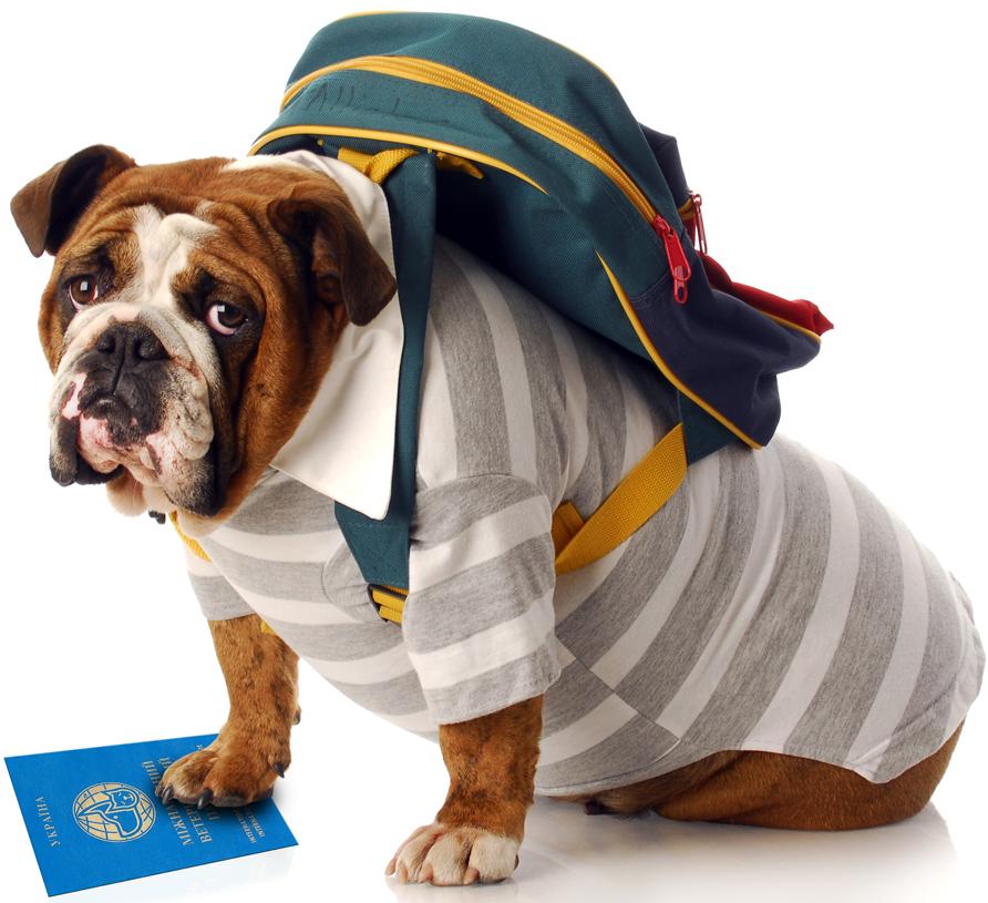 Правила поездки за границу с домашним животным