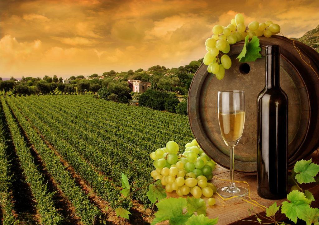 Итальянские виноградники, как объекты инвестирования