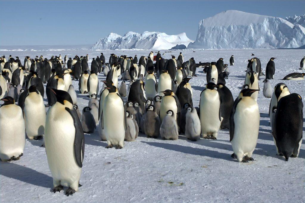 Антарктида: как стать ее гражданином