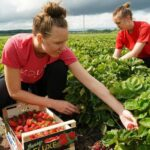 Сезонные работы в Эстонии вновь под вопросом